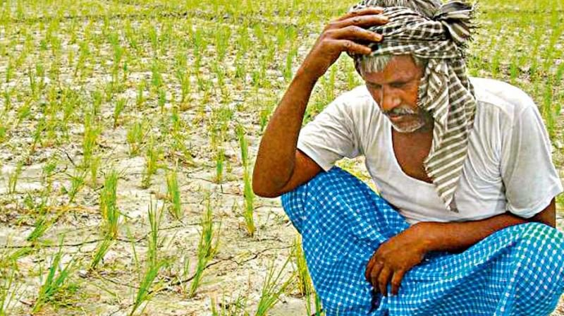 Farce of Fasal Bima : How far the second term of Modi led BJP government would address the farmers' distress?